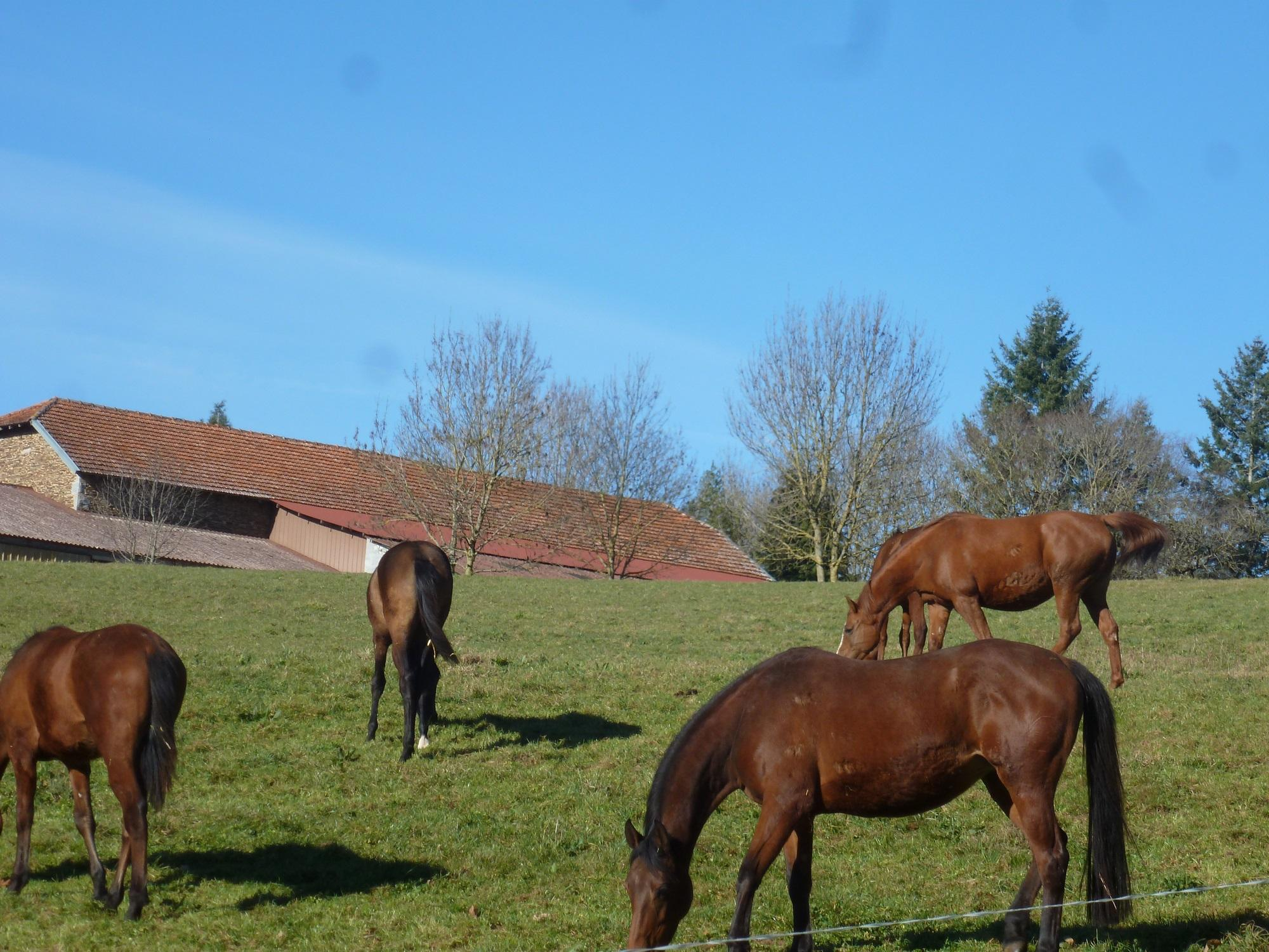 France stud farm for sale.   Ref : S1